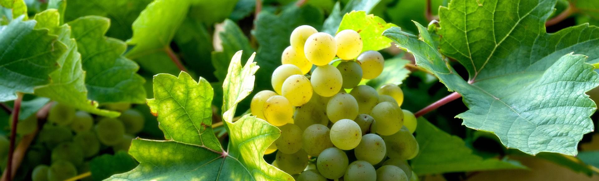 Naturnaher Weinbau!